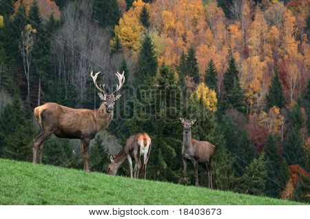deer on a colourful background