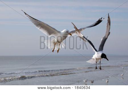 Shorebirds1