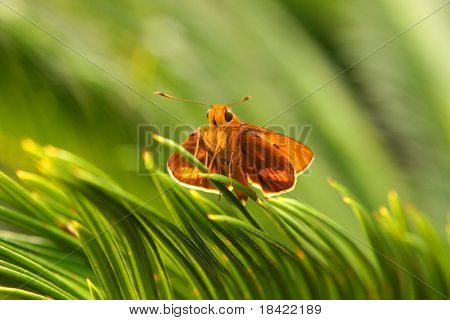 A small orange butterfly is seating on the palm leaves in Roma Street Parklands, Brisbane, Australia.