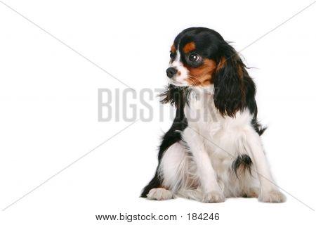 High Key Dog