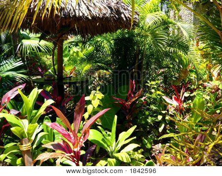 Arco iris de plantas tropicales alrededor de una sombrilla de paja