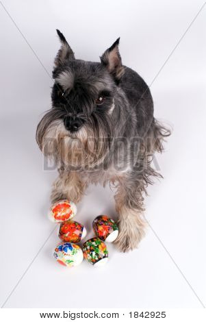 Dog And Easter Eggs