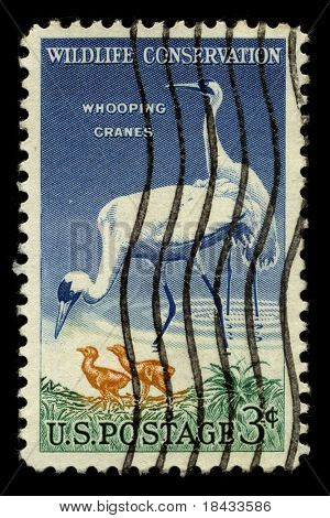 USA - CIRCA 1950: A stamp printed in USA shows image of the dedicated to the Wildlife Conservation circa 1950.