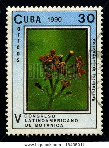 CUBA - CIRCA 1990: A stamp dedicated to the Rondeltia is a neotropical genus of flowering plants in the family Rubiaceae, circa 1990.
