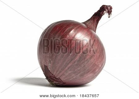 Cook's Red Onion