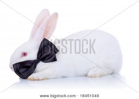 Adorable White Bunny With Black Bow Tie