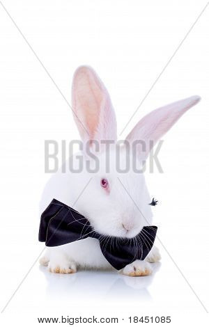 Adorable Bunny Withe Black Bow Tie