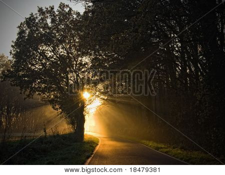Sunlight Through Mist
