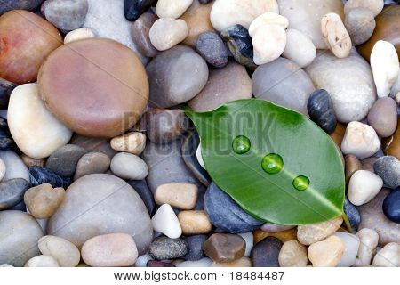Green leaf with droplets on beach of rocks for zen still life