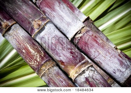 Sugar cane on a green leaf background.