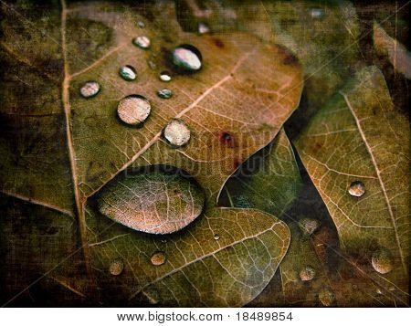aging dried leaves photography