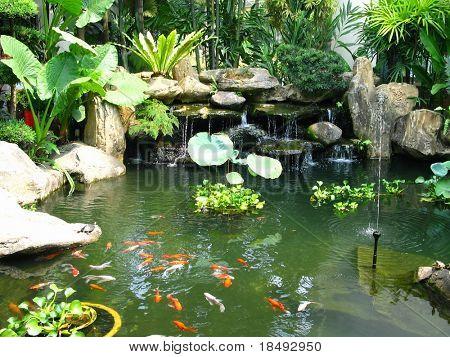 Tropischen Teich