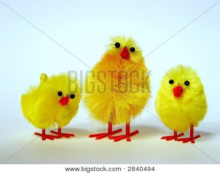 Three Easter Fledglings
