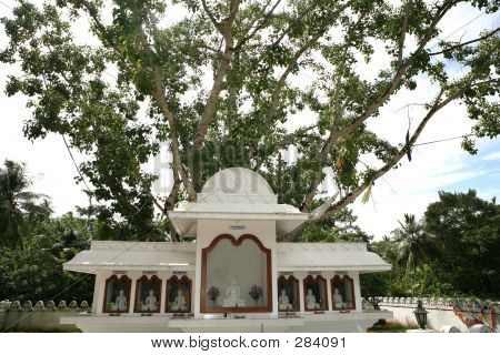 Bodh Tree Shrine