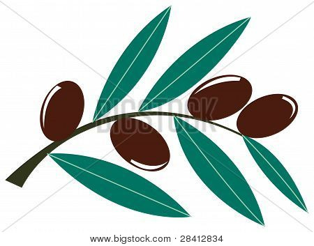 Olive brach