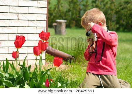 Tulip photographer