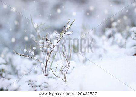 First Snow Impression