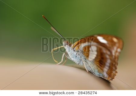 Butterfly on handrail (side view)