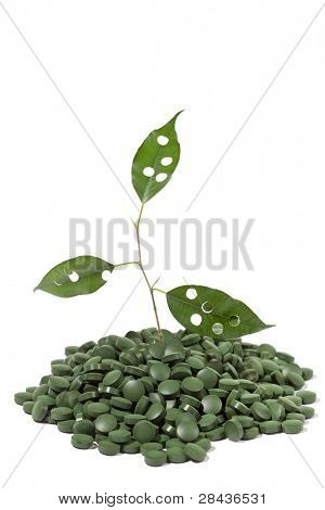 spirulina tablets and green plant