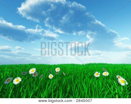 Gras und weißen Blumen
