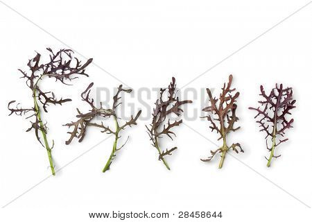 Purple Mizuna leaves in a row on white background