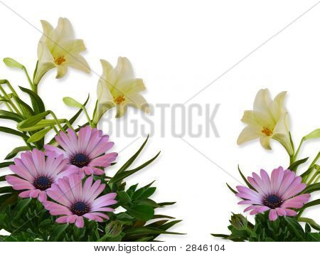 Lilies And Daisies Floral Background