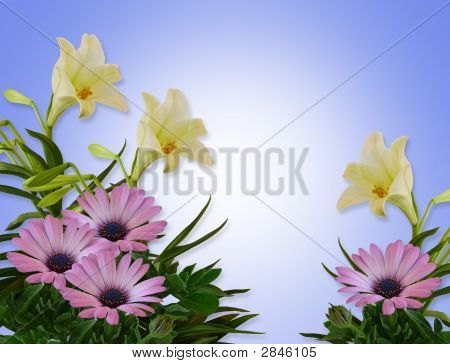 Lilies And Daisies Floral On Blue Background
