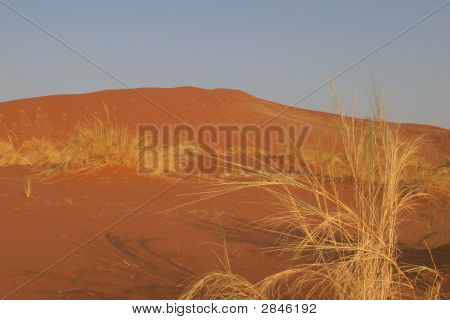 Desert And Vegetation