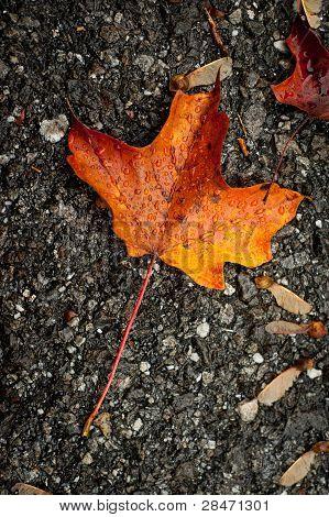 Autumn Leaf On Concrete