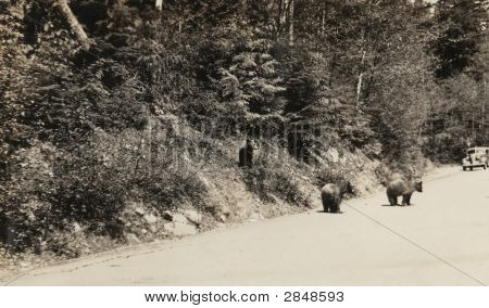 Vintage Family Photo of Bears 1917
