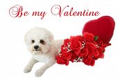 Valentines Day Dog. A beautiful white dog on a white background. Valentines Day Heart and red roses. poster