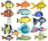 Algae, Animal, Aqua, Aquarium, Background, Blue, Bottom, Bright, Caribbean, Clip Art, Collection, Co poster