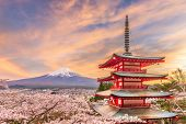 Fujiyoshida, Japan view of Mt. Fuji and pagoda in spring season with cherry blossoms at dusk.  poster