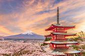 Fujiyoshida, Japan view of Mt. Fuji and pagoda in spring season with cherry blossoms at dusk.  poster