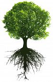 Trees with roots. This image is a vector illustration and can be scaled to any size without loss of