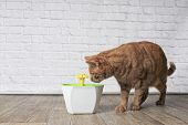 Thirsty Ginger Cat Looking Curious To A Pet Drinking Fountain. Side View With Copy Space. poster