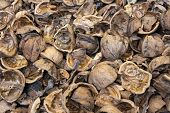 Close Up View Of Shattered Walnut Shells. Textured Background Of Drought Walnut Shells poster