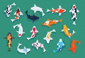 Koi Fishes. Japanese Colorful Carp, Asian Goldfishes Vector Set. Illustration Of Koi Japanese Carp,  poster