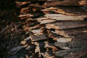 Firewood, For Fire, Stacked In A Flat Pile. Wall Firewood, poster