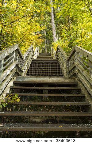 Step Trail Autumn