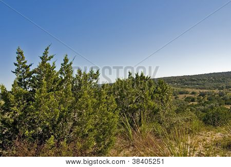 Hill Country State Natural Area, Bandera Texas