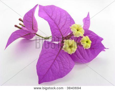Santa Rita\'s Flowers