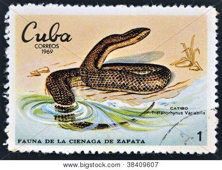 CUBA - CIRCA 1969: A stamp printed in cuba dedicated to fauna of the Zapata swamp shows catibo circa