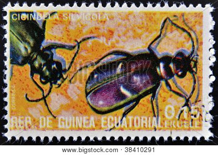EQUATORIAL GUINEA - CIRCA 1973: stamp printed in Guinea dedicated to insects shows cicindela sylvico