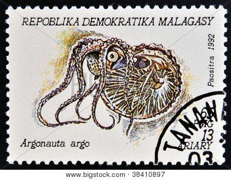 Madagaskar - CIRCA 1992: Een stempel gedrukt in Madagaskar toont argonauta argo circa 1992