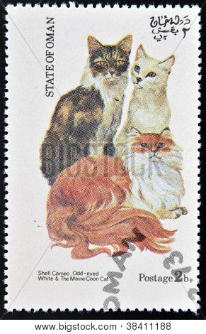 OMAN - CIRCA 1973: stamp printed in State of Oman dedicated to cats shows shell cameo odd-eyed white