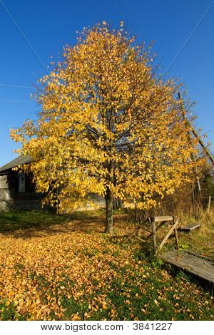 Autumn In Russian Village