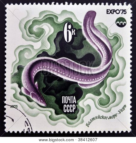 USSR- CIRCA 1975: A stamp printed in Russia shows Chrysiptera circa 1975
