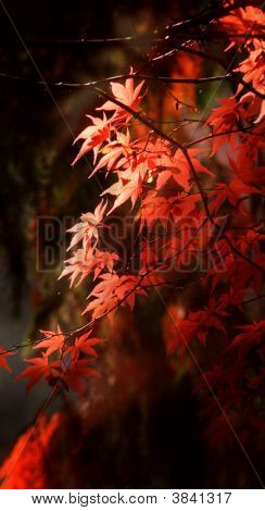 秋天的颜色 8