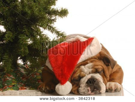 Bulldog Under Christmas Tree